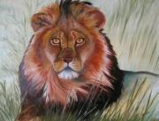 tableau animaux lion feroce animaux nadia : Le regard du lion