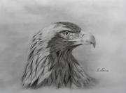 dessin animaux isere le versoud l aile : l'aigle