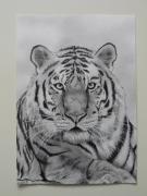 dessin animaux isere le versoud le tigre : Le tigre