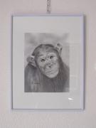 dessin animaux isere le versoud le singe encadre : Regard attendrissant d'un singe (encadré)