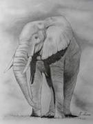 dessin animaux isere le versoud elephant : l'éléphant