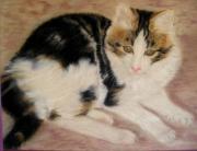 tableau animaux dessin craie ,a l03 craie ,a l ecu pastel velours : chat angora