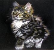 dessin animaux dessin craie ,a l03 craie ,a l ecu qualite velours : chaton noir