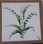 tableau fleurs : Plante sansevieria