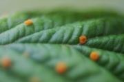 photo fleurs feuille d arbre orange nature fleur : feuille