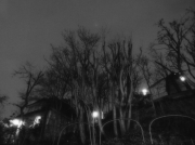 photo paysages arbre paris nuit montmartre : Rue Lepic