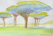 tableau paysages paysage vallee pins parasols : BOSQUET DE PARASOLS