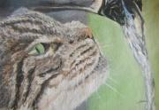 dessin animaux chat eau boire animal : Chat et eau