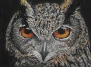 dessin animaux oiseau chouette nuit : Chouette alors !