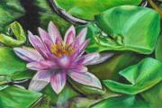 dessin paysages nenuphar fleur nature : Nénuphars