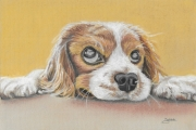 dessin animaux chien animal domestique yeux mignon : Oh qu'il est mignon !