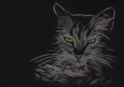 dessin animaux chat etrange clairobscur : It's where my demons hide