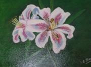 tableau fleurs fleur blanche sur fond vert : Le lys blanc