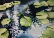 tableau paysages nenuphars eau nature reflets : Nénuphars