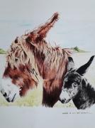 tableau animaux ane poitou marron animal et petit : Leslie