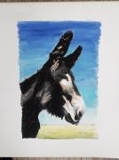 tableau animaux ane tete d animal noir nature : âne de profil