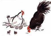 dessin animaux coq encre chinois expressionniste : Coq-Poule-Poussins