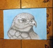 dessin animaux aigle oiseau crayon gris pastel : Aigle