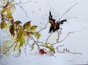 tableau animaux aquarelle abby oiseau watercolor : Aquafeutre 25