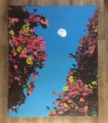 tableau paysages lune feuilles paysage colore : Lune dans la lumière