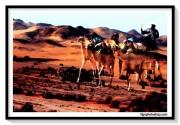 photo paysages desert chameau egypte sable : CARAVAN