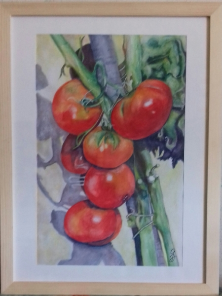TABLEAU PEINTURE Tomates t omates Nature morte Aquarelle  - Tomates Marmande