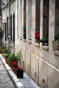 photo geranium cour : Cour géraniums