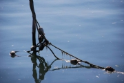 photo paysages amarrage boue : Amarrage