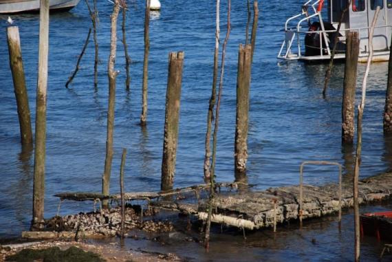 PHOTO mer Paysages  - Parc à huitres