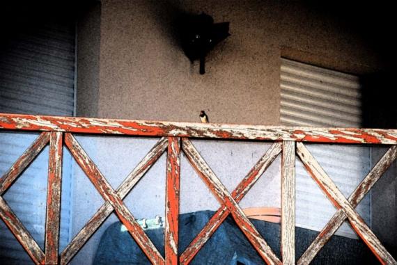 PHOTO hirondelle oiseaux Animaux  - Hirondelle