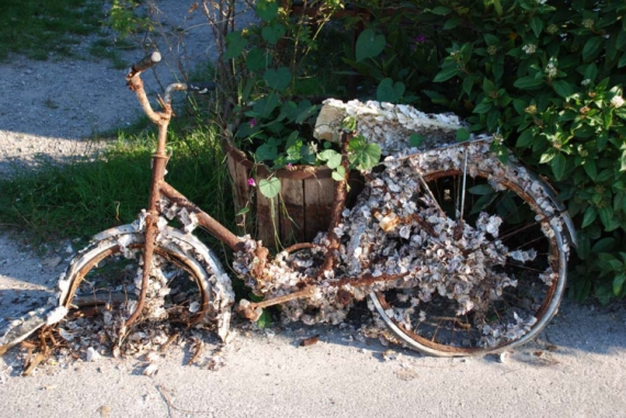 PHOTO vélo rouillé Nature morte  - Vélo coquille