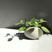 photo nature morte plante pot de fleur vert : VERT-DE-GRIS