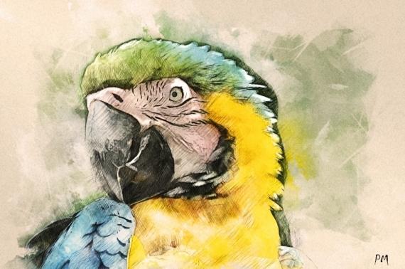 ART NUMéRIQUE oiseaux perroquet zoo exotique Animaux  - Perroquet ARA