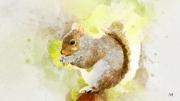 art numerique animaux ecureuil foret printemps faune : Ecureuil roux