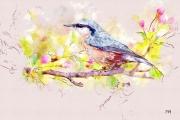 art numerique animaux oiseaux printemps normandie pommier : Sitelle Torchepot