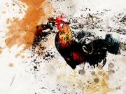 art numerique animaux animaux coq ferme campagne : Coq Brahma perdrix