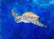 tableau animaux tortue ocean bleu mer : Tortue
