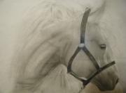 dessin animaux cheval blanc crin oise : Le cheval blanc amoureux