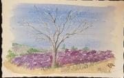 autres paysages lavandes arbres paysages provence : parmi les lavandes