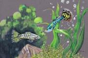 tableau animaux poisson aquarium guppy algues : Males guppys nagent dans l'eau