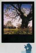 photo paysages : Cherish