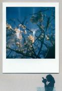 photo fleurs : Spring Awakenigs