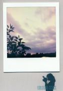 photo fleurs : Sky Painting