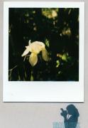 photo fleurs : Iris Forever