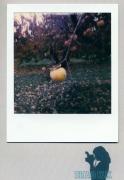 photo fruits : Persimon