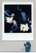 photo fleurs : Friendship