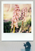 photo fleurs : Coupling