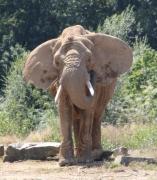 photo animaux elephant nature : Éléphant
