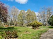 photo paysages arbres sentier promenade calme : Les grands arbres du parc