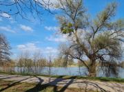 photo paysages nature plan deau arbres ciel : Plan d'eau et promenade